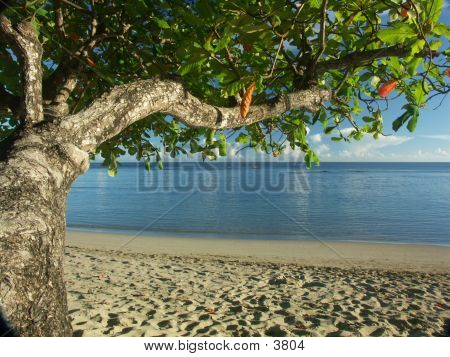 Beachside Tree