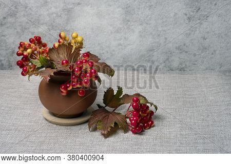 Viburnum In Clay Pot On Gray Background Still Life