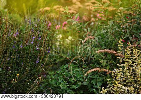 Flowers In Autumn Garden Background. Autumn Outdoor Floral Gardening