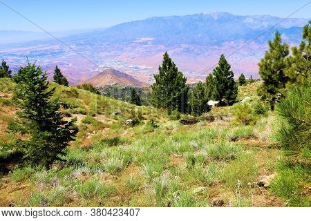 Lush Alpine Meadow Surrounded By Pine Trees On A Mountain Ridge Overlooking The Arid Desert Terrain