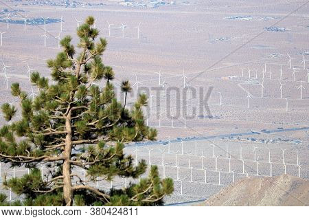 Pine Tree On A Mountain Ridge Overlooking The Arid Desert Floor With Rows Of Wind Turbines At A Mode