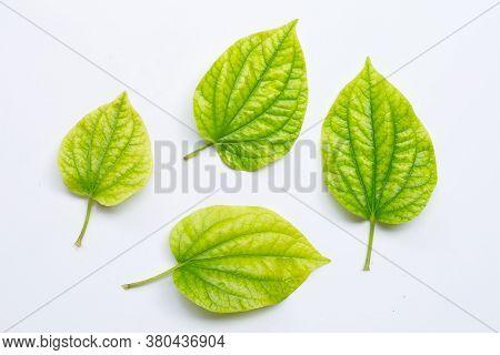 Piper Sarmentosum Or Wildbetal Leafbush On White Background.