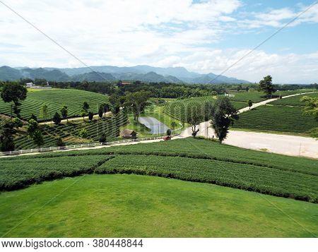 Chiang Rai. Thailand, June 17, 2017: Road Crossing A Tea Plantation In The Mountains Of Chiang Rai,