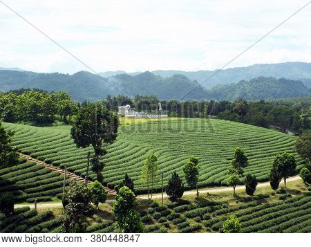 Chiang Rai. Thailand, June 17, 2017: A House At The Bottom Of A Tea Plantation In The Mountains Of C