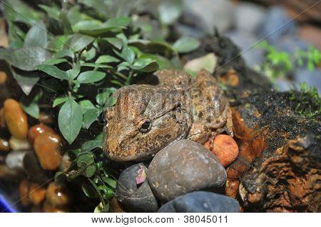 Rare Frog