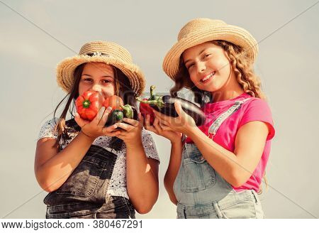 Happy Sisters Work At Family Farm. Organic Vegetables. Vegetables Market. Natural Vitamin Nutrition.