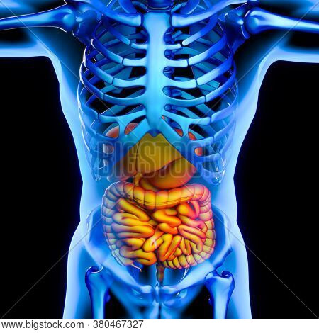 Illustrative medical image showing the digestive system. Concept of physical discomfort and health. 3d render.