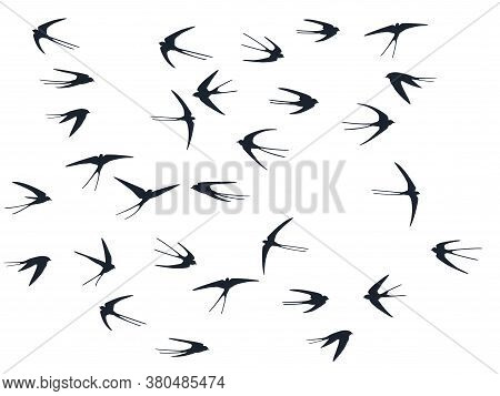 Flying Martlet Birds Silhouettes Vector Illustration. Migratory Martlets Swarm Isolated On White. Fl