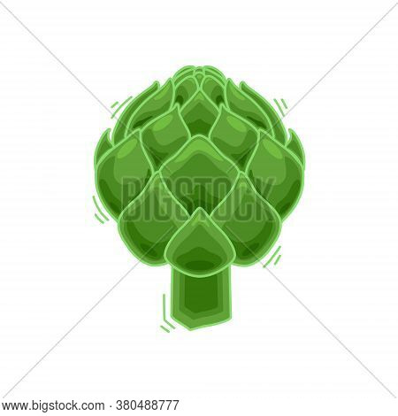 Vector Illustration Of A Green Artichoke. Food Artichoke In Cartoon Style Close-up. Isolated Backgro
