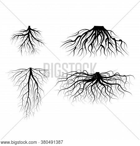 Silhouette Black Tree Roots Various Types Shapes Set Underground Element Of Plant For Web And App. V