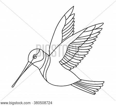 Vector Line Art Monochrome Flying Humming Bird. Black Contour Illustration Isolated On White Backgro