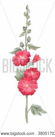 Beautiful Image With Watercolor Summer Red Mallow Flower Painting. Stock Illustration.