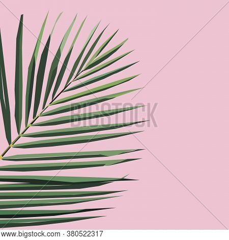 Jungle Rainforest Royal Palm Leave Isolated On Pink Background. Exotic Tropical Vector Design Illust