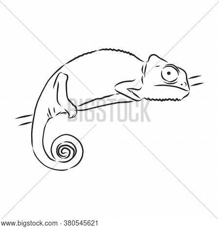 Sketch Of Chameleon. Hand Drawn Vector Illustration.chameleon Animal, Vector Sketch Illustration