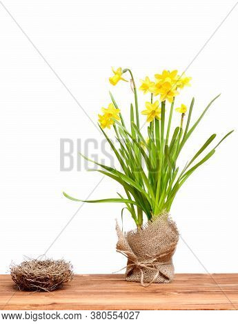 Empty Bird Nest And Spring Yellow Narcissus Flower In Burlap