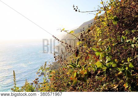 Coastal Chaparral Shrubs Including Black Sage Plants On A Rural Mountainous Slope Overlooking The Pa