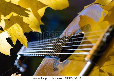 Classical guitar and autumn foliage