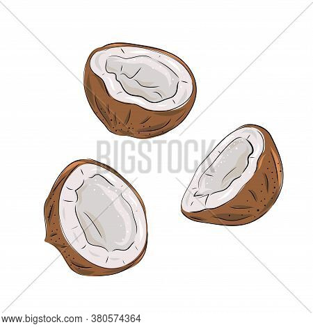 Coconut - Whole Nut Coco Segment And Coconut Pulp. Half Tropical Fruit. Vector Illustration In Hand