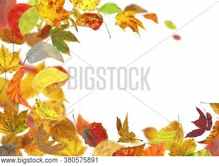 Falling Autumn Foliage Isolated On White. Autumn Leaves Falling To The Ground