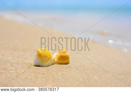 Two Seashells Lie On A Sandy Beach. In The Background, The Blue Sea. Focus On Seashells, Blurred Bac