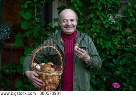 Old Man Gathers Mushrooms Showing A Cep From Basket.