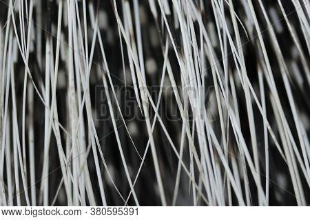 Porcupine Quills - Extreme Macro Close Up Shot