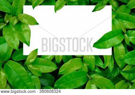 Mockup Paperwhite Cards Perpendicularly Placed On Natural Green Bonbons, Layouts Create Vertical Pap