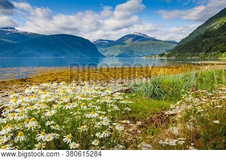 Panoramic View From Sylte Or Valldal Of Norddalsfjorden In Norway With Valldalen Valley, Flowers, Mo
