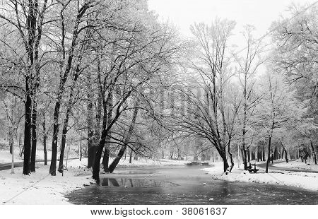 Trees and frozen lake
