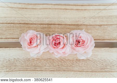 Pink rose  on wood background.