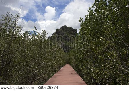 Pathway Leading To The Mountain With Forest On The Left And Right.