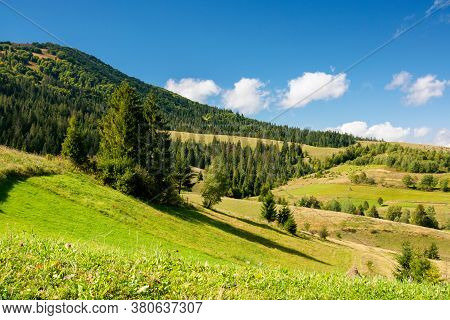 Rural Fields On A Sunny Autumn Day. Trees On The Grassy Hills. Beautiful Countryside Scenery Of Carp
