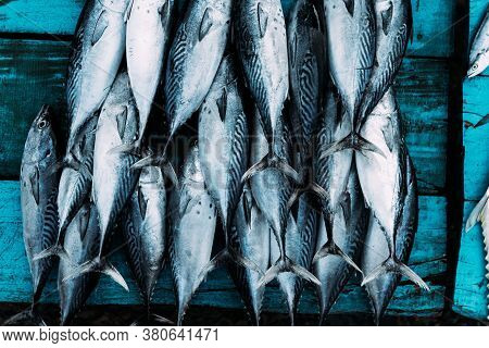 The Market For Marine Fish. Street Market. Sale Of Fresh Fish. Freshly Caught Fish. Fish Shop. Produ