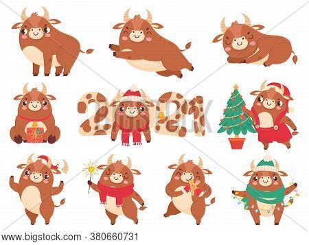 Cute Ox. Color Bulls Chinese New Year 2021 Symbol, Animals With Horns, Cows And Buffalo Family Calen