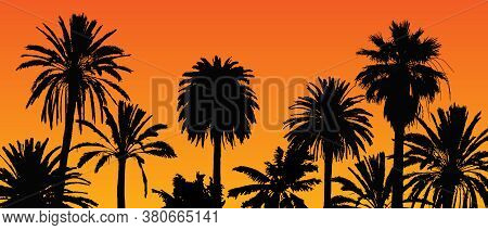 Beautiful Vector Landscape With Palm Tree Silhouettes On Orange Background During Sunset.