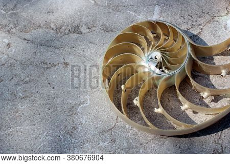 Nautilus Shell With Copy Space Concrete Stone Background Cross Section Symmetry Fibonacci Spiral Seq