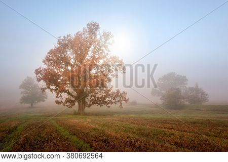 Autumn Morning Landscape. Sun Shines Through Mist At In Meadow. Tranquil Nature Background.