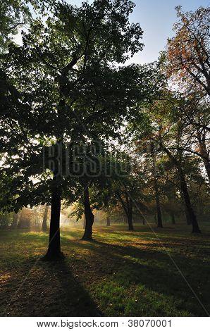 Autumn Morning Light