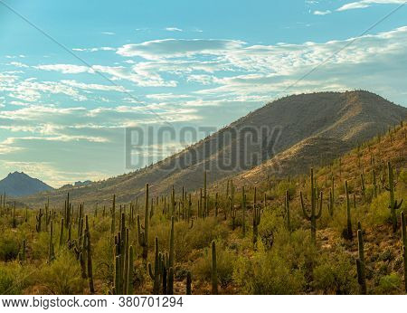 Evening Over The Sonoran Desert Of Arizona With Saguaro Cacti And A Mountain.