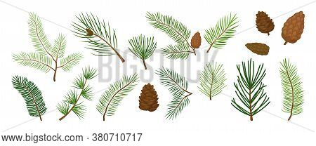 Christmas Tree Branches, Fir And Pine Cones, Evergreen Vector Set, Holiday Decoration, Winter Symbol