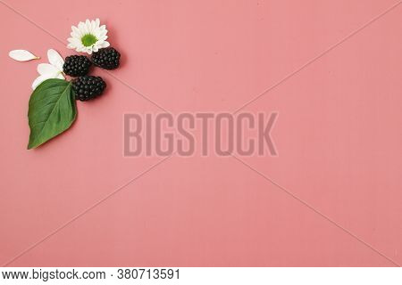 Blackberries With Flowers And Basil Leaves On Bright Pink Background. Concept Summer Fresh Berries T