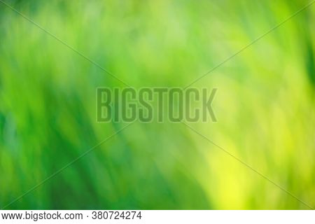 Bright Round Natural Light Bokeh On Vivid Green Emerald Leaves Color Background
