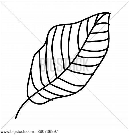 Autumn Line Art Beech Leaf. Hello Autumn Concept. Suitable For Collage, Postcards, Stickers, Posters