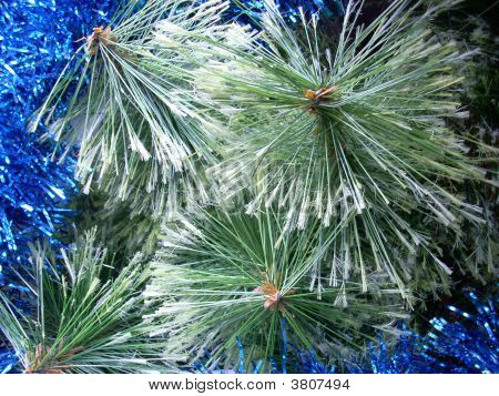 Christmas Pine Tree Needles