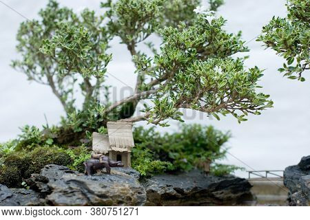 A Bonsai And Penjing Landscape With Miniature.