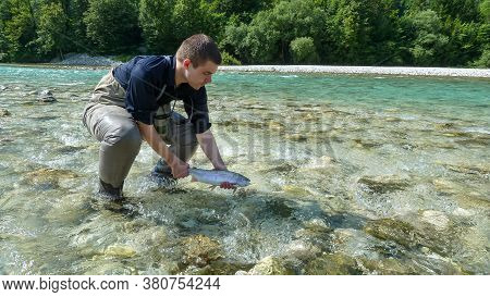 A Fisherman Releasing A Rainbow Trout Back Into The Soca River In Slovenia.