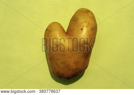 Wonky, Funny, Ugly Vegetable Or Food Waste Concept. Ugly Potato In Heart Shape On Light Green Backgr