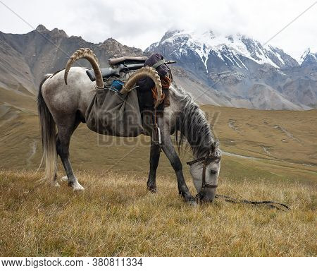 Horse Under The Saddle With The Trophy Of Ibex And Weapons In The Mountains. The Return From The Hun