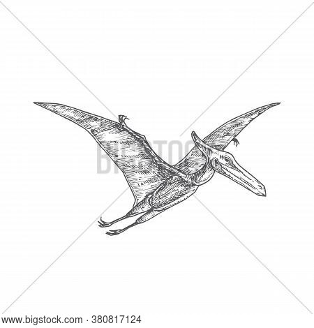 Prehistoric Dinosaur Doodle Vector Illustration. Hand Drawn Pterodactyl Reptile Engraving Style Draw