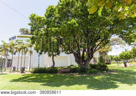 Cairns, Australia - October 15, 2009: A Big Tree Near The Casino In Cairns